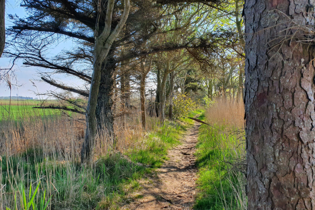 Pathway lined by trees